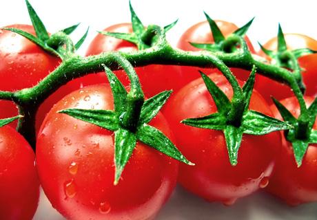 tomate_berwis_pixelio_4601350219